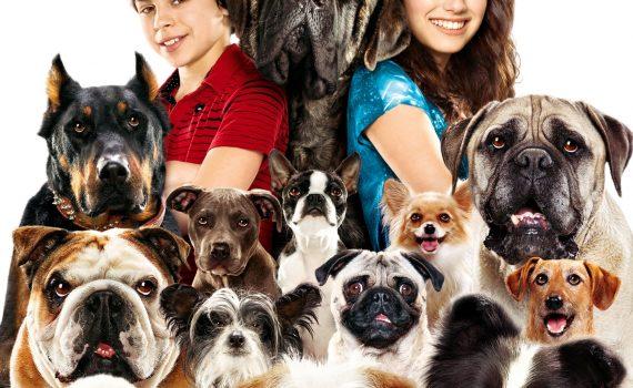 """Affiche du film """"Palace pour chiens"""""""