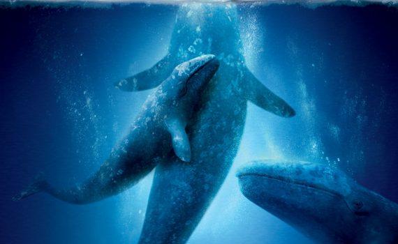 "Affiche du film ""Miracle en Alaska"""