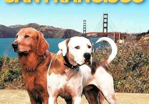"""Affiche du film """"L'incroyable voyage II : À San Francisco"""""""